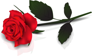 single-rose-clip-art-ytklp5qte