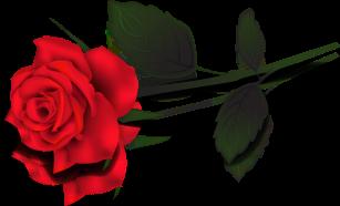 single-rose-clip-art-ytklp5qte